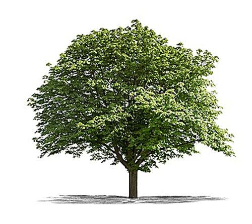 Aus Bäumen wird Papier