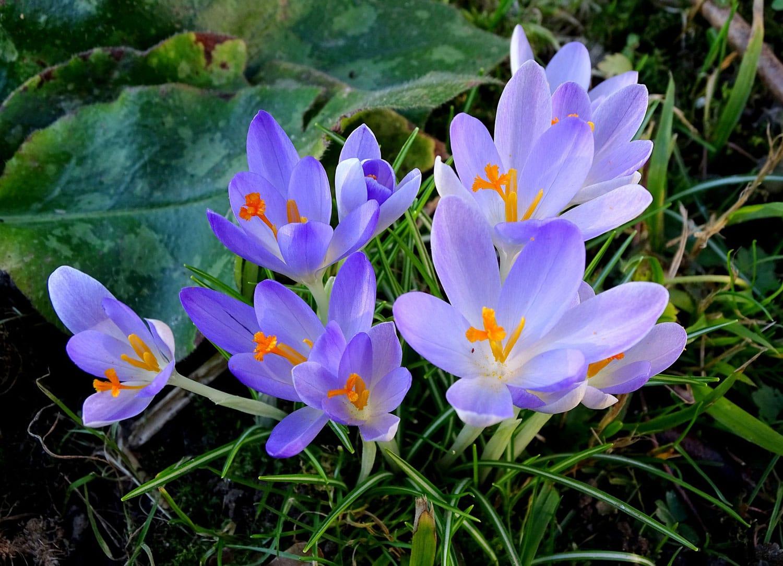 Frühlingsfest im interkulturellen Garten