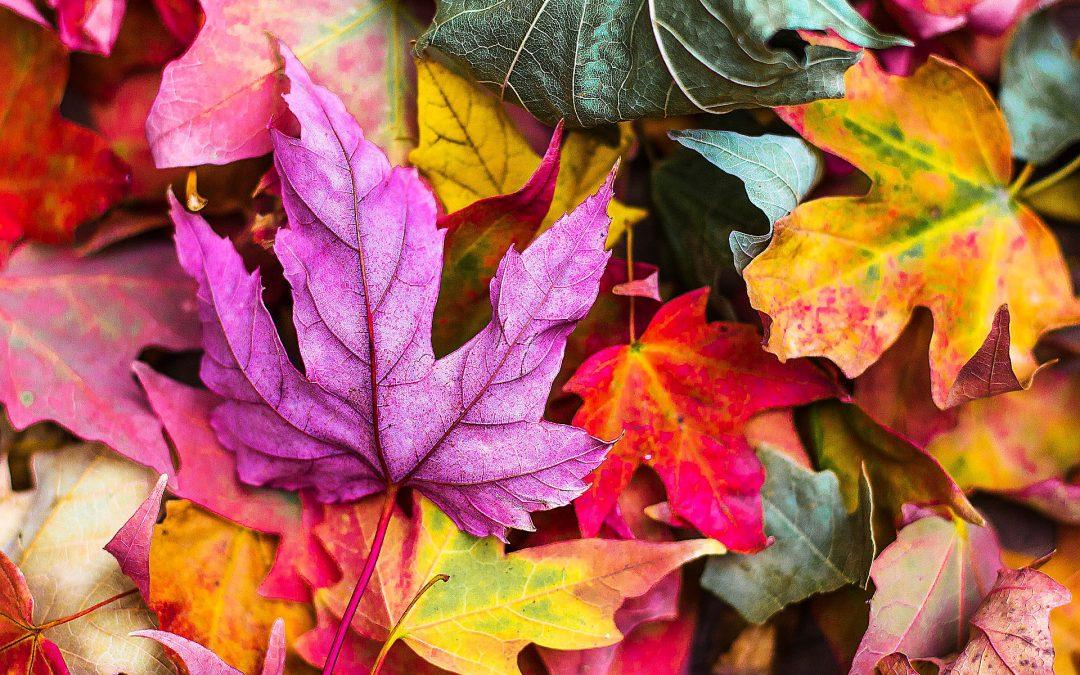 Die Highlights des Oktobers im Gutshaus